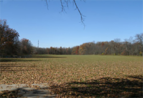 large_field